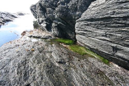 Ultra-green seaweed in the tidepools