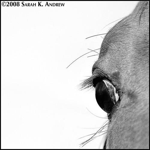 Deconstructive Study of a Horse Eyeball