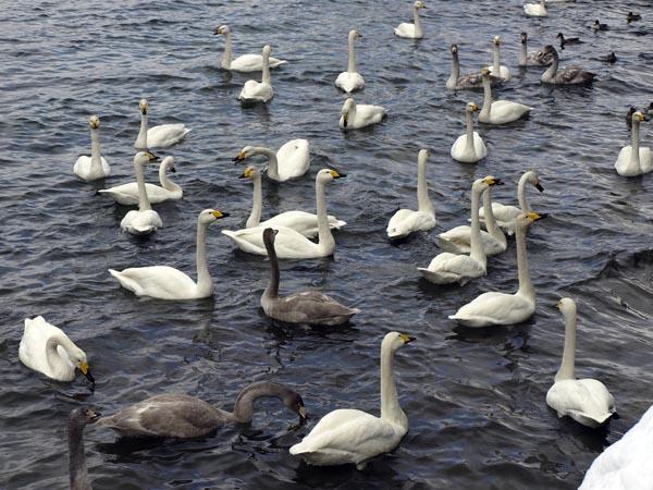 2008年1月 十和田湖 3
