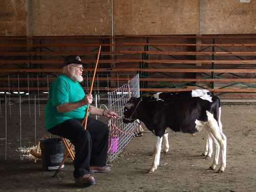 Howie Van Ord Training the Raffle Holstein Calves, Lewis & Clark