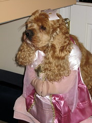 Buffy's Princess Halloween Costume - buffy-pri...
