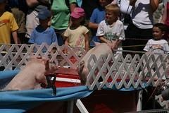 2008-08-23-MV-trip-fair-pig-race7