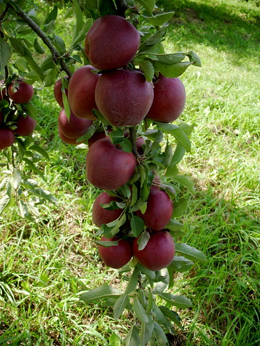 Happy Valley Orchard