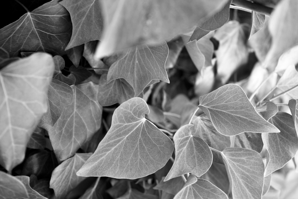 B&W Leaves