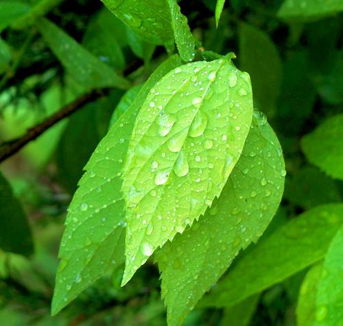 leaves n rain good