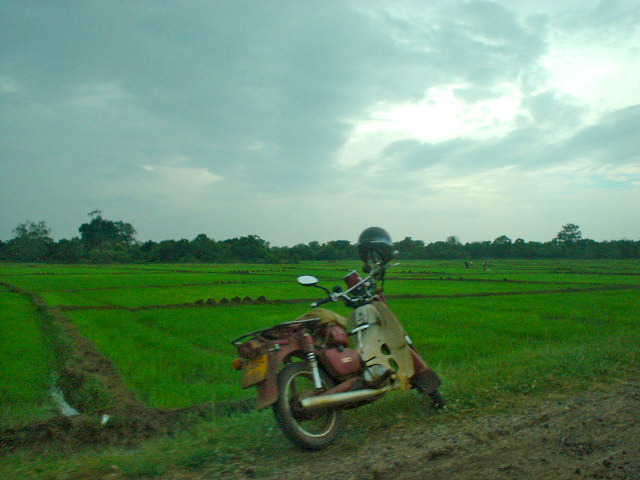 Motorcycle and Paddy Fields