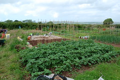 080628-allotment011