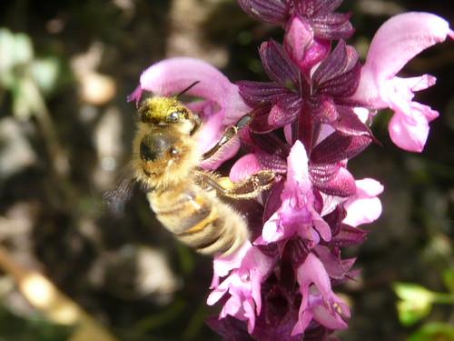 Pollen!