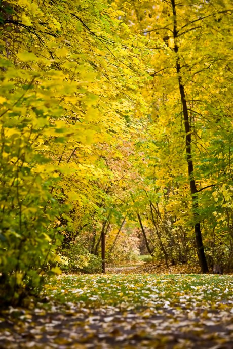 Leaves Path (by Phanix)