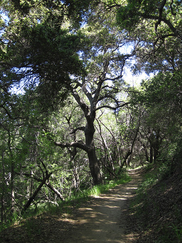 Placerita Canyon Loop 06