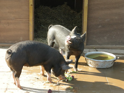 The Hog Blog - November 2007, part 1