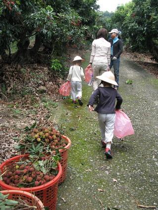 【採果樂】大樹鄉的玉荷包(3.10ys)