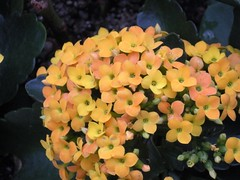 Flowers at Longwood Gardens