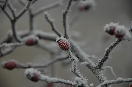 frozen particles on the berries