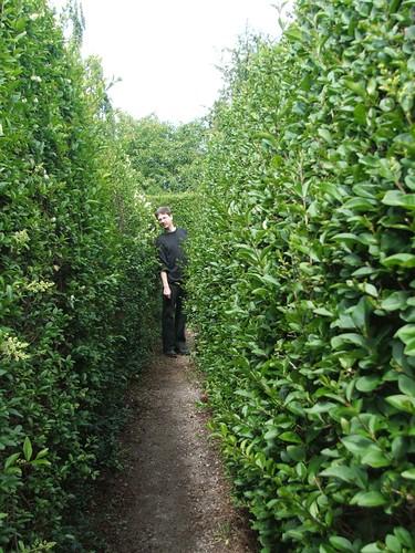 Joel in the maze