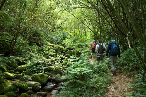 In the beginning the trail started in a lush, wet forest.  At the top the flora changed to a drier environment.