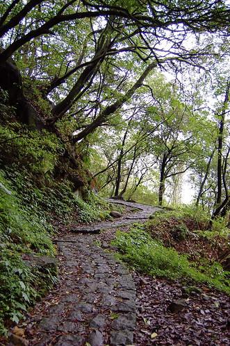 Trail Trail Trail