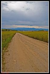 Entre trigo esta el camino