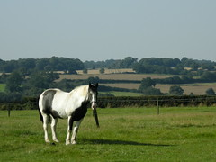 Horse in Hertfordshire
