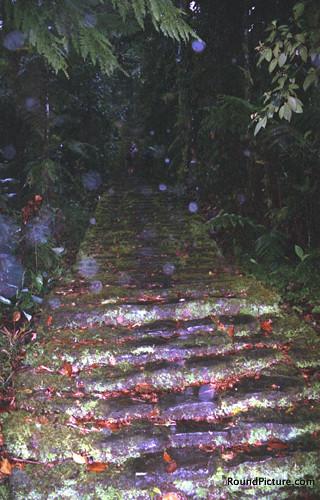 CO La Ciudad Perdida 1200 Steps