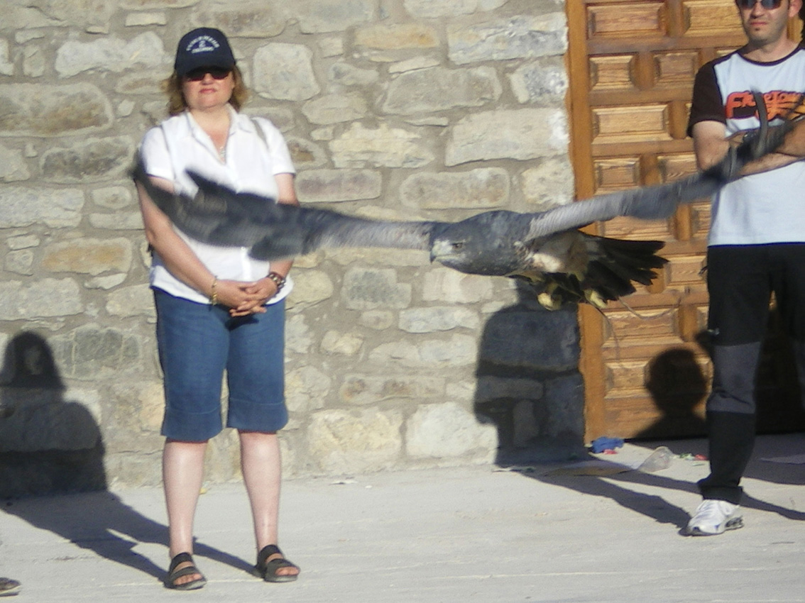 Aguila escudada en pleno vuelo