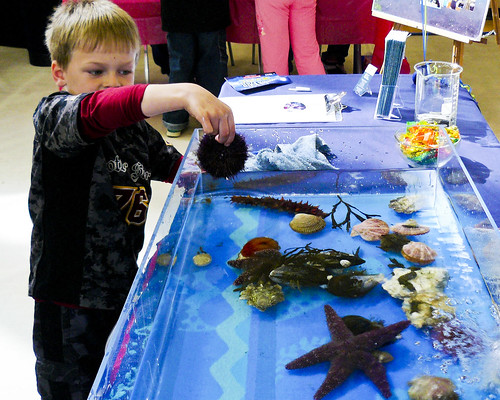 2010.04.24 Ladysmith Science Fair 1