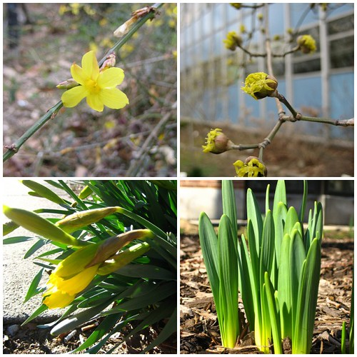 greens and yellows of spring