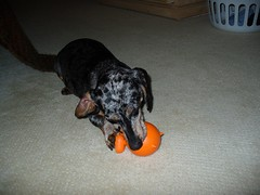 Waldo and the ball that never stops squeaking