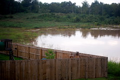 My neighbor's fence.  And the new lake behind it.
