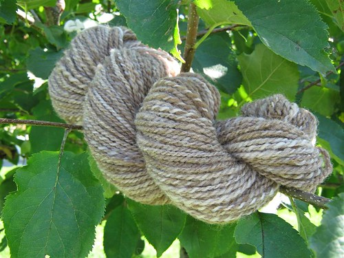 Appletree Wool Worm