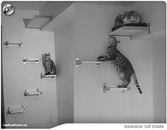 Copie de cat_stairs