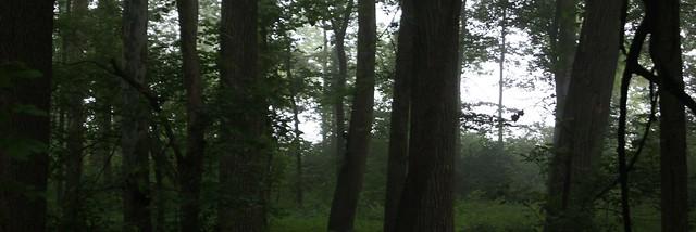 Forrest Fog