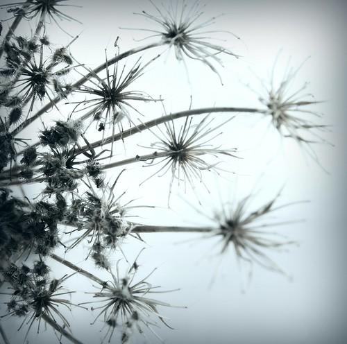 dust of my heart... (by provincijalka)