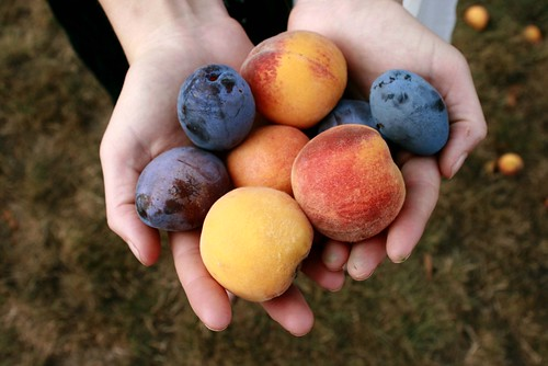 Picking Fruit by M Lyn.