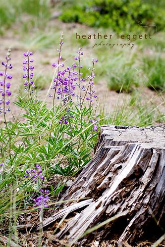 wildflowers WM