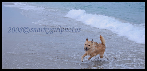 Mia in the surf