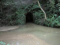 Hancocks Wood Tunnels Loftus