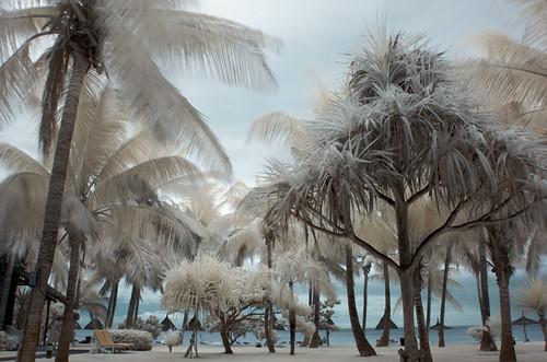 mauritius - infrared por sausyn