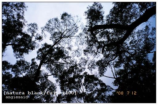 b-20080712_natura_096_iso4_012.jpg