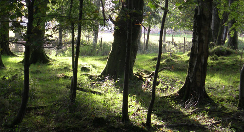 trees_evening_shadow