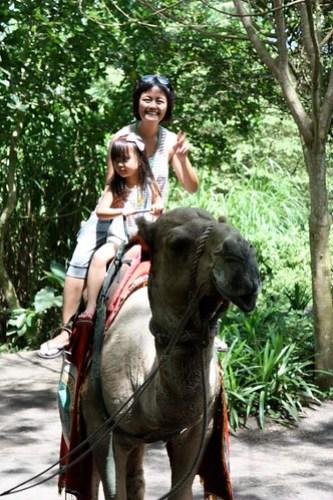 at Bali Safari & Marine Park