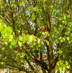 Little GIRL TOMBOY CLIMBING A TREE