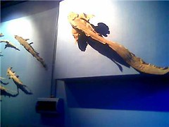 Blue Reef wall decor