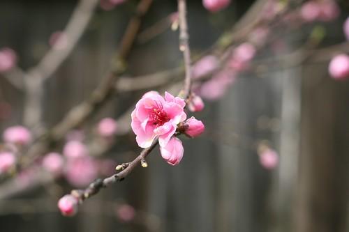 Spring in Sonoma