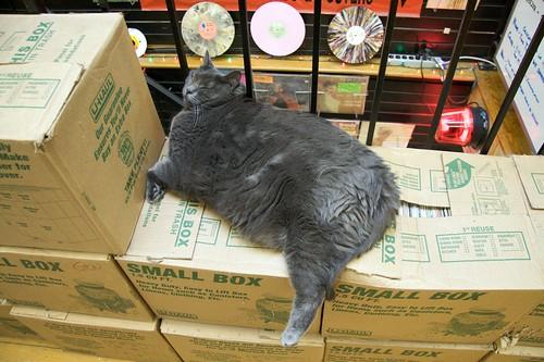 Levykaupan kissa