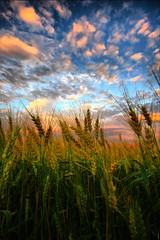 The Exceedingly and Super Abundantly God, Wheat Kings