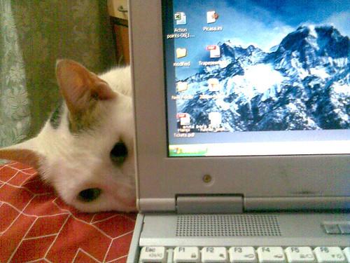 Okay, okay... I'm just gonna make myself comfortable behind here... don't mind me