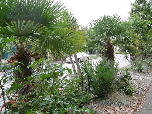 Fremont street garden
