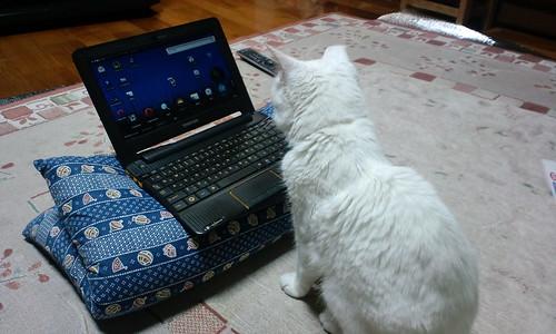 猫、パソコンに興味があるようです。