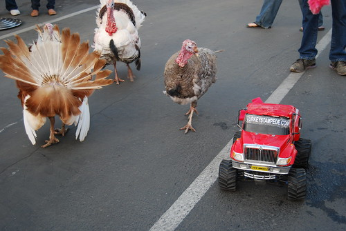 Racing turkeys